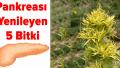 Pankreası Yenileyen Bitkiler