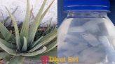 Aloeveranın sağlığımız için çok faydalı kullanım alanları